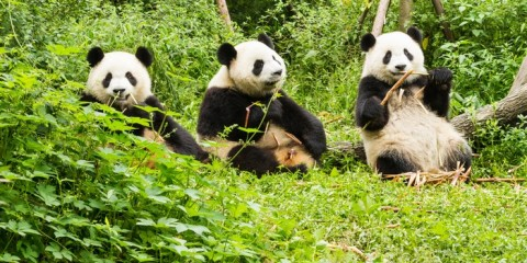 "Sichuan, il ""Paradiso in Terra"""