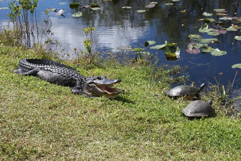 US_Everglades_1249