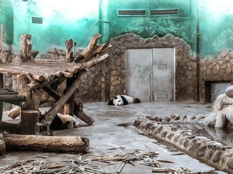 Panda Tour - Panda
