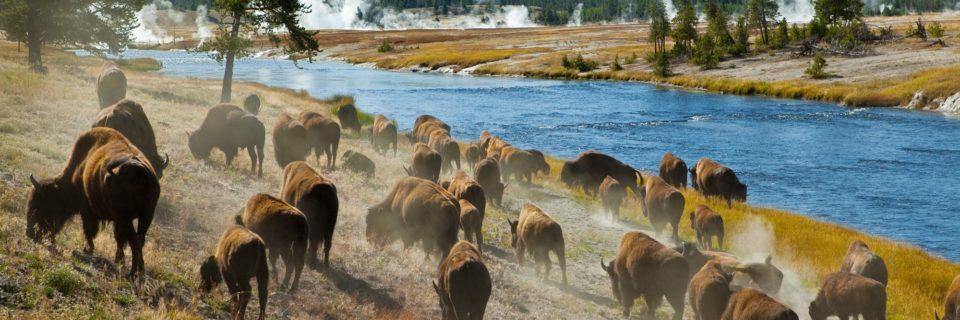 Parco Nazionale Yellowstone e Montagne Rocciose